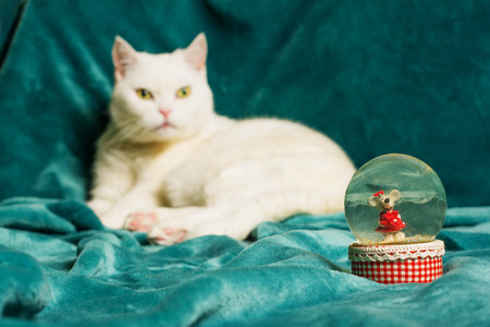 Crystal snowball with a mouse in it, and a white female cat lying on an aquamarine blanket in a blurry background. Фото со стока