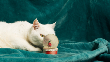 White female cat is lying on a dark cyan blanket, and lurking behind a crystal snowball. She has got her eye on a mouse inside a sphere. Sixteen-by-Nine crop. Selective focus.