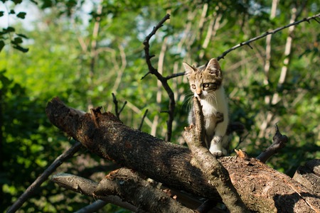 Cute kitty is standing on a tree trunk in the woods. The kitten is a domestic short-haired cat. Фото со стока