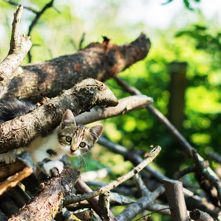 Gorgeous domestic short-haired kitty is sneaking through a pile of thick branches.  Selective focus. A beautiful bokeh is visible in a background. Фото со стока