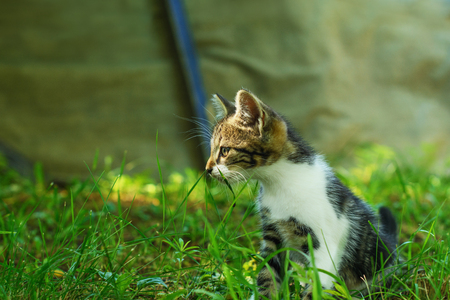 Kitten, sitting in the grass, in the shade, and looking aside, is partially lit by the warm sunlight. Selective focus on its head. Imagens