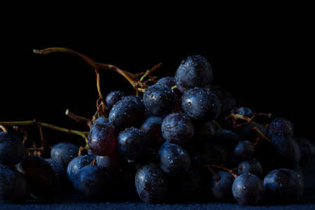 Grape Muscat Hamburg. A beautiful cluster of fresh ripe dark blue-purple berries full of water droplets on their skin. Grape cluster with its cane, rachis, peduncles and pedicels.