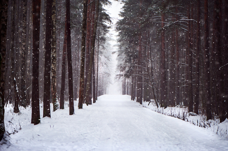 Snowy road in the forest, soft, furry snow falls. The road to love, to the heart. Salvation of forests, ecology, the road home. Winter fairy forest. 版權商用圖片