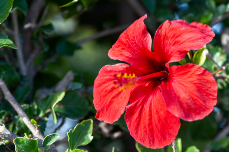 Beautiful tropical background with bright red flower, tropics Stock Photo