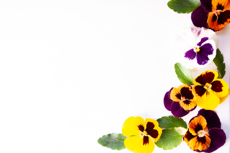 Frame made of pansies flowers isolated, top view, macro. Flat lay. For congratulations, copy space. Theme of the spring of summer and the arrangement of nature