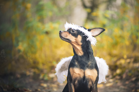 Angel dog, portrait of a dog in the image of an angel, in a wreath and with white wings. Symbol of kindness and friendship of dogs.