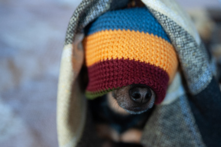 Cute puppy in a hat and blanket in the house. Clothing for dogs, care for animals in the cold season. Home comfort in winter and autumn Stock Photo