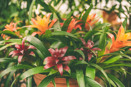 Background of colorful tropical leaves and flowers, exotic pattern