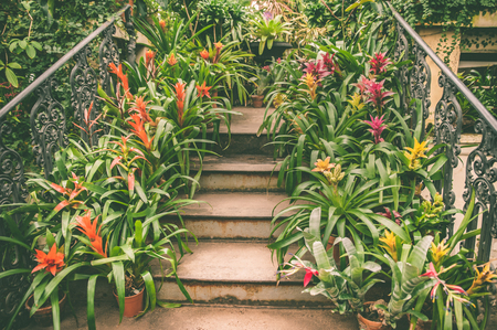 Staircase leading up is lined with pots with colorful tropical plants and flowers, an exotic pattern