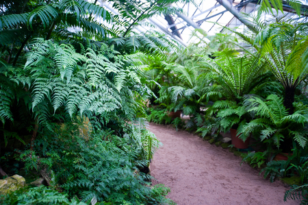Greenhouse of tropical fern plants, Botanical garden