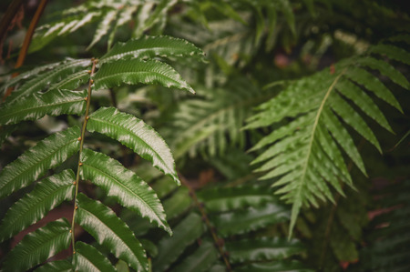Green leaves of tropical fern plants,  green jungle summer background  in  vintage tone Stock fotó