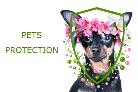 Animal protection concept. Portrait of a dog and illustration of a shield with flowers. Protection of pets from natural phenomena, ticks, fleas. Health care