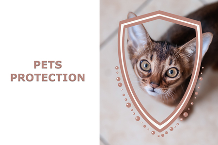 Pets protection concept. Portrait of a kitten and shield illustration. Protection of pets from hunger and cold, from aggression and destruction. Health care Stock Photo