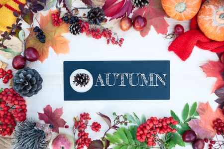 Autumn background with maple leaves, apples and pumpkins, mountain ash and plums. Frame  with the words autumn.  Top view, flat lay