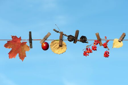 Creative photo on an autumn theme, Autumn leaves, cones, berries and fruits on clothespins, against a blue sky