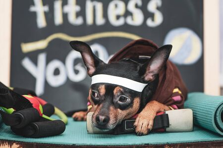Tired dog  after workout. Pet Fitness , sport  and lifestyle concept.   Fitness and Sports Motivation Imagens
