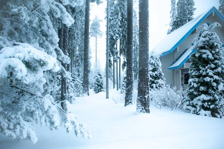 Beautiful winter forest and snow-covered house. Firs and pines in the snow, landscape