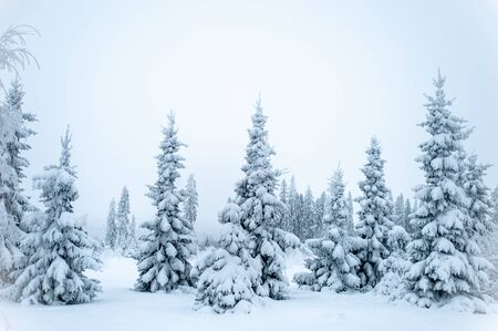 Fabulous winter landscape, Christmas trees in the snow, cold, snowy winter Imagens