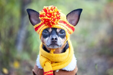 Cute dog in funny hat on the background of the autumn forest. Concept clothes for animals, fashion for dogs Imagens