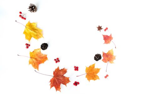 Autumn leaves on a white background, maple leaves and rowan berries, flat lay, space for text
