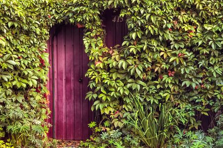 Fantastic entrance, door surrounded by climbing plants