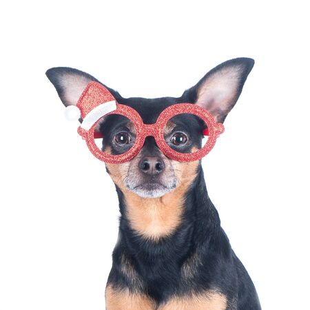 Portrait of the Dog in funny New Year's glasses isolated on white, Christmas theme, New Year Stock Photo