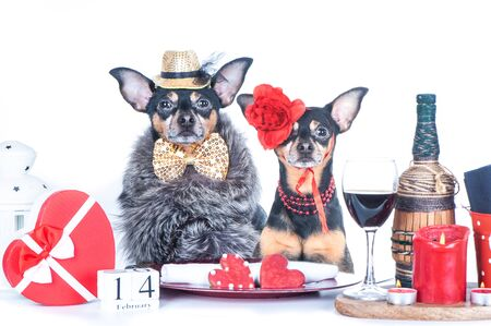 Luxurious couple of two dogs is sitting at the table. Valentine's Day theme. Loving couple in a restaurant Stock Photo - 137503187