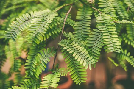 Green leaves of tropical plants, green jungle summer background in vintage tone