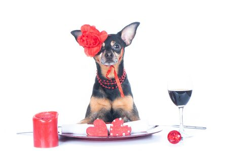 Beautiful  Dog  girl is sitting at the table. Valentines Day theme. Happy valentines day card isolated on white