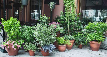 Many beautiful potted plants outside a street cafe Standard-Bild