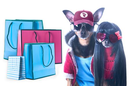 Stylish couple of fashionable dogs and shopping packages isolated, Shopping concept and sales  Фото со стока