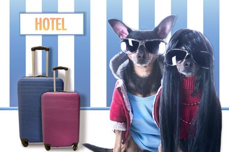 Stylish couple of dogs in hotel, suitcases and a sign Hotel, Theme hotel for dogs, shelter