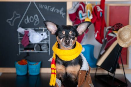 Dog wardrobe concept , Portrait of a cute dog with a wardrobe with clothes Banque d'images - 150348041