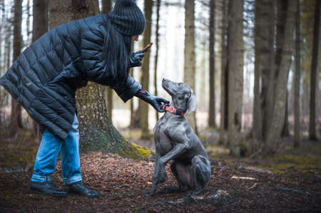 Girl in a coat and hat with long hair plays with a dog blue Weimaraner breed in nature