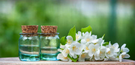 Essential Jasmine oil. Bottles with Jasmine oil, Fresh flowers and leaves on a natural green background