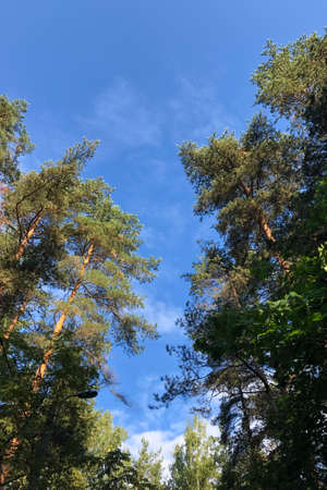 Vignette of green tree branches with blue sky, vertical photo Banque d'images