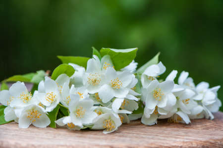 White jasmine flowers on a wooden board on a natural green background, top space for text, description of jasmine flowers Banque d'images