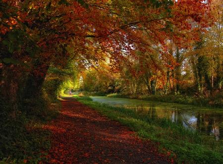 meath: autumn trails