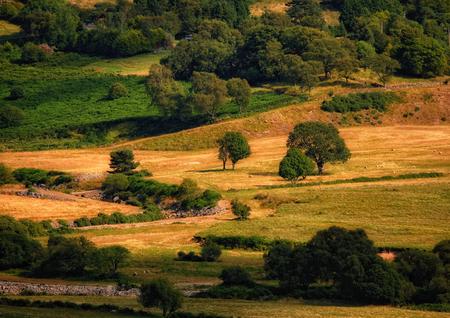 mountainscape: among the meadows