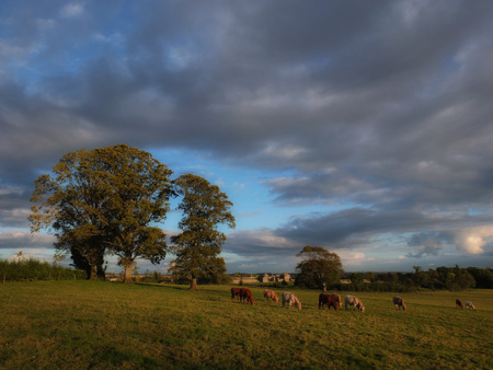meath: at sunset