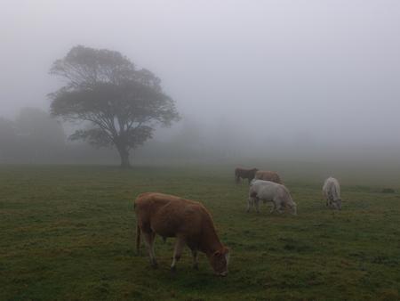 meath: in a dense fog