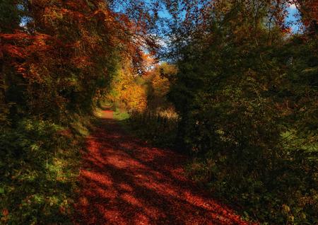 meath: autumn trails III