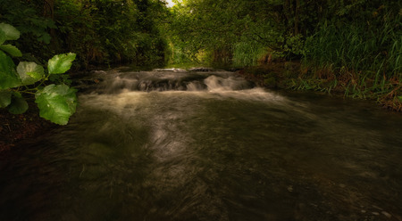meath: trout wilds