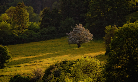meath: lonely in evening light Stock Photo