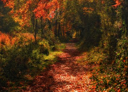 meath: autumn trails II