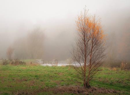 dense: in a dense fog