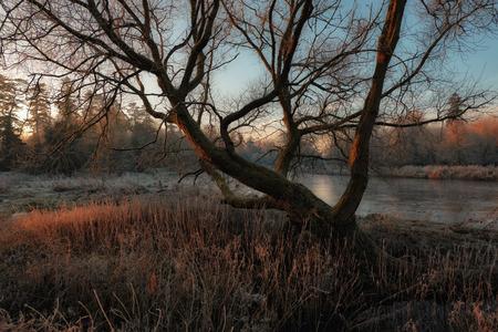 meath: morning light