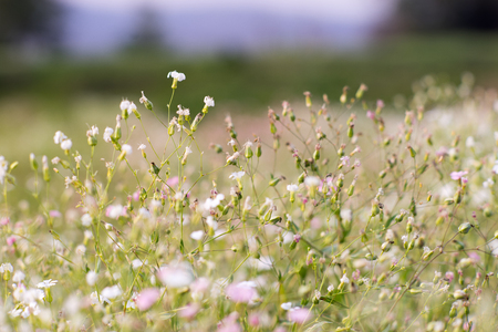 litle: litle flowers