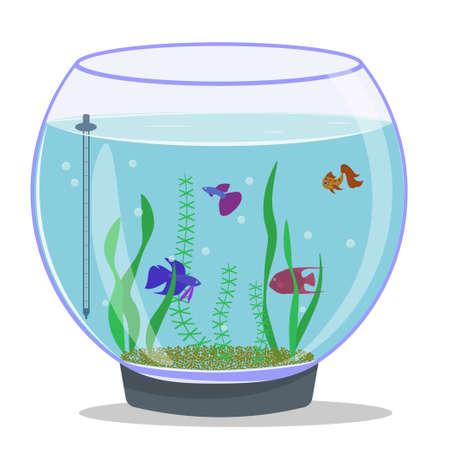Round aquarium with fish and plants. Isolated vector image on white background. Colored fish in the aquarium.