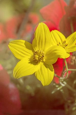 Yellow flower in a dreamy effect,